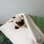 ♥ Cat Pillow Luna